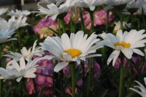 お彼岸のお墓参りにお供えする花