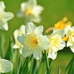 1月の花といえば水仙