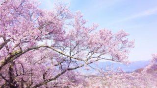 桜餅の名前の由来となった満開の桜