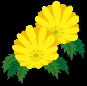 plant_fukujyusou