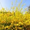 flower-138928_640