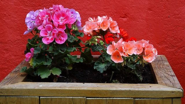 プランターに植えられた花