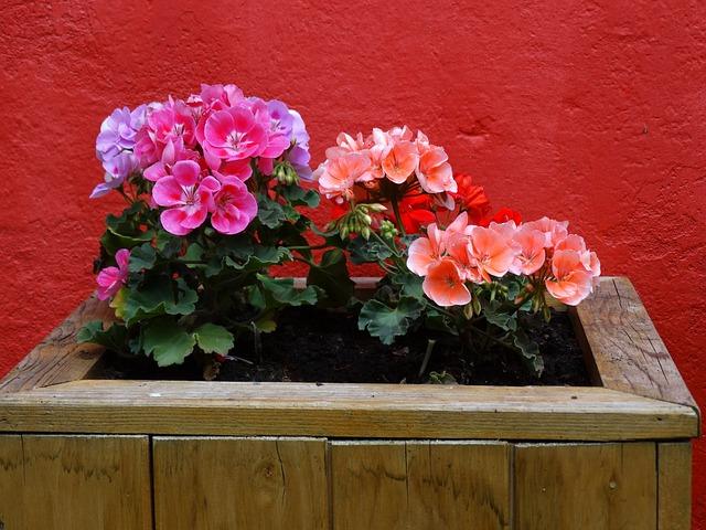 flowers-813901_640