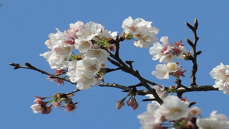 2月の花といえば梅