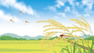 秋の収穫時期の風景