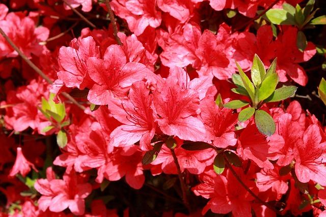 5月の花といえばつつじと藤関東の名所もご紹介します気になる話題