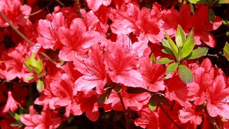 5月の代表的な花のつつじ