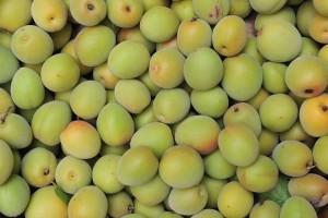 japanese-apricot-71161_640