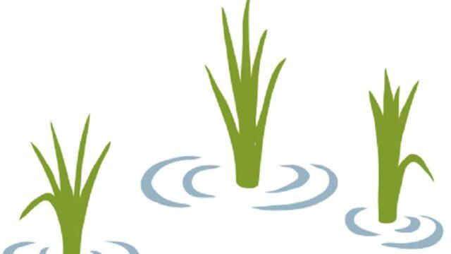 田植え後の稲のイラスト