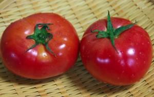 夏野菜のトマト