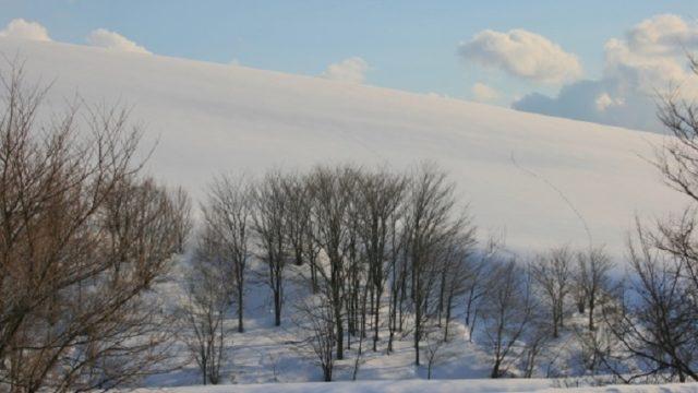 寒の内の頃の雪景色