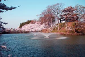 高田公園と桜