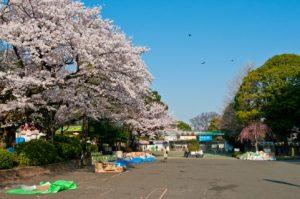 上野戦争の舞台となった上野の山