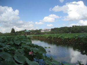 上野戦争の舞台となった不忍池