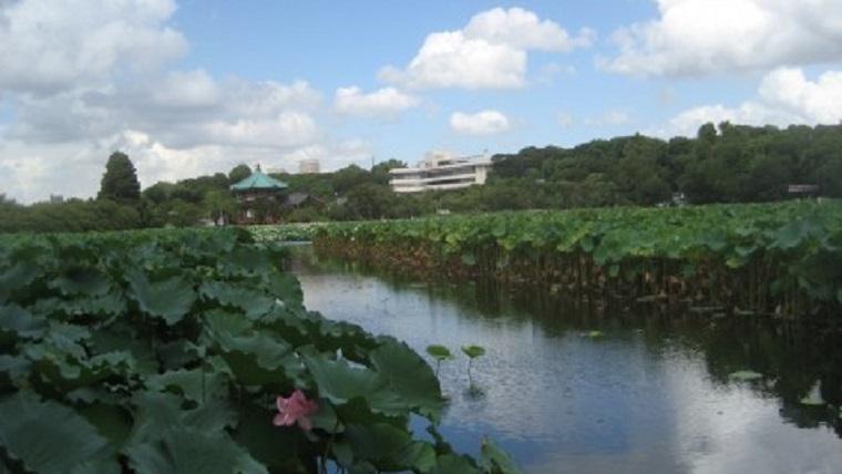 上野戦争が行われた不忍池