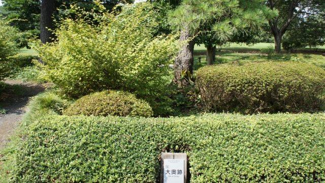 幾島が生活した江戸城大奥跡