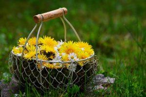 立夏の頃の黄色と白の花