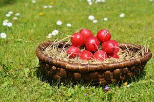 春が旬の野菜の一つラディッシュ
