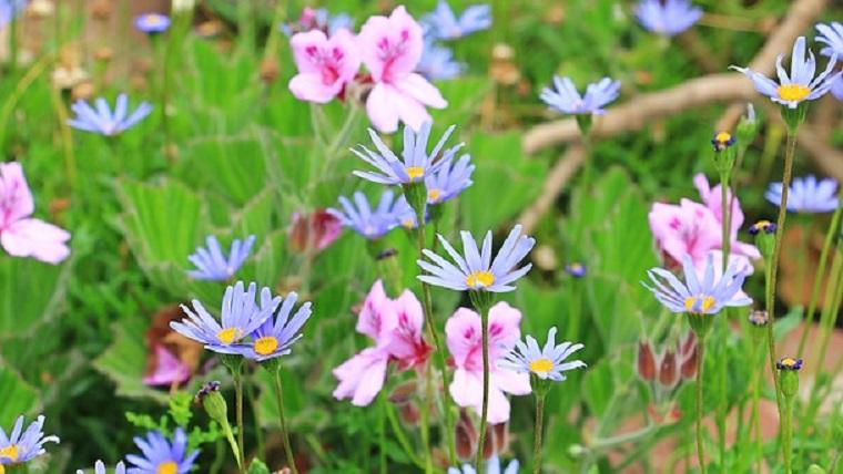 春に咲く青い花