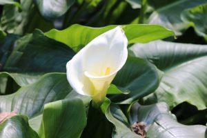 梅雨の時期に咲く花のカラー