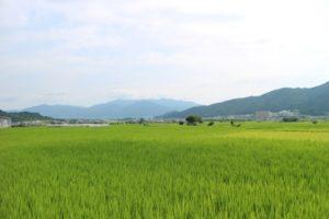 亀岡市の田園風景