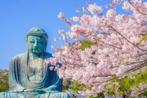 4月の満開の桜と大仏