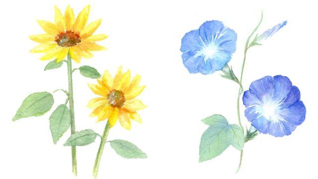 夏の花のイラスト